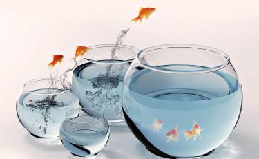 fish-migration
